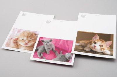 画像2: 板東寛司ポストカードBook 「猫の肉球」