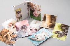 画像2: 板東寛司ポストカードBook 「猫の肉球」 (2)