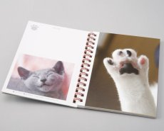 画像3: 板東寛司ポストカードBook 「猫の肉球」 (3)