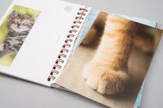 画像4: 板東寛司ポストカードBook 「猫の肉球」 (4)